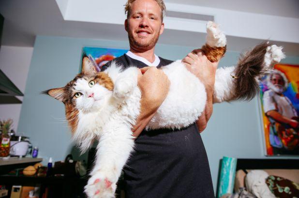 jenis kucing terbesar