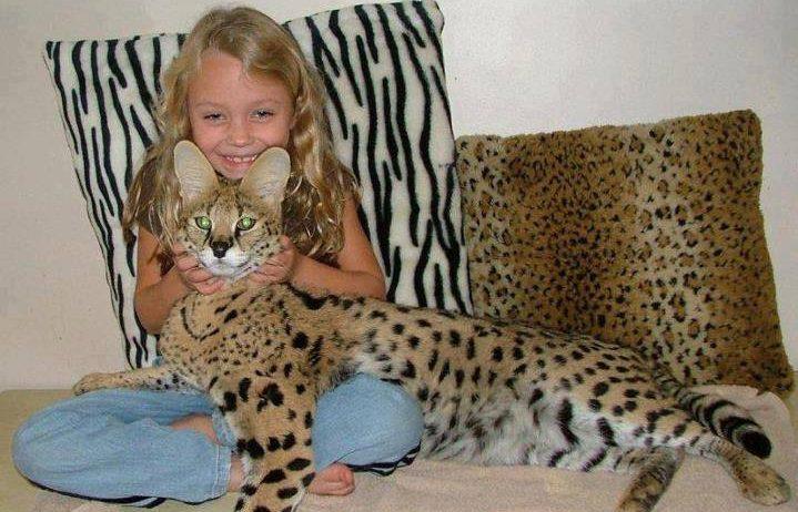 jenis kucing termahal