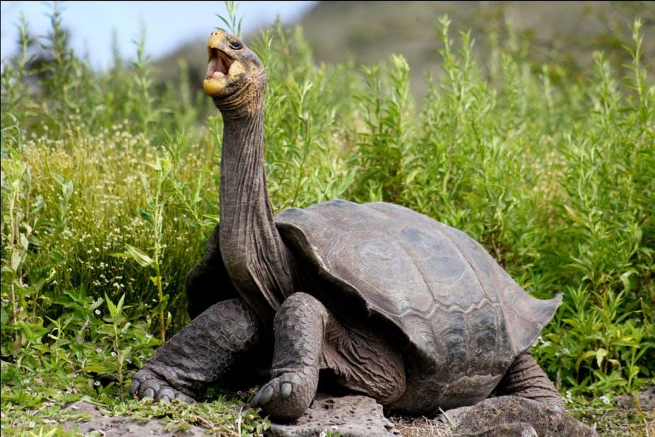 jenis kura-kura terbesar