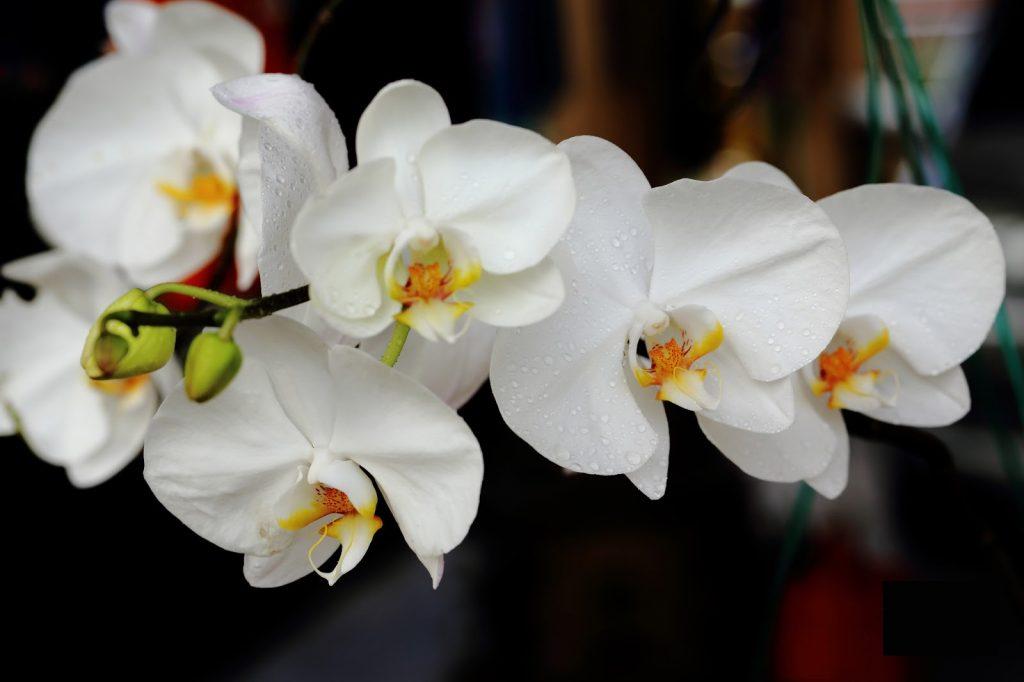 Bunga nasional Indonesia terindah