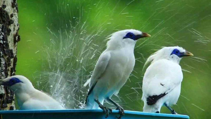 Burung yang dilindungi di Indonesia