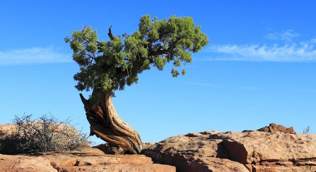 Jenis Pohon Cemara Dan Gambarnya Jenis Net