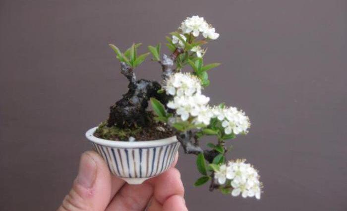 bonsai bunga terkecil