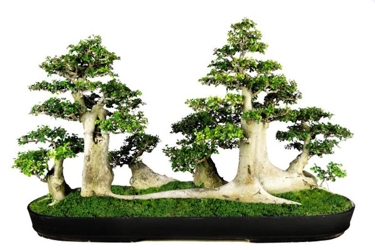 bonsai gaya hutan