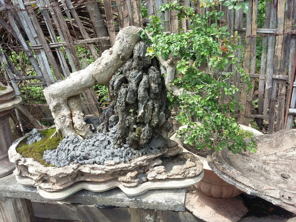 bonsai serut air terjun